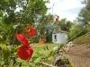 14. B&B bijzondere bloemen en bomen