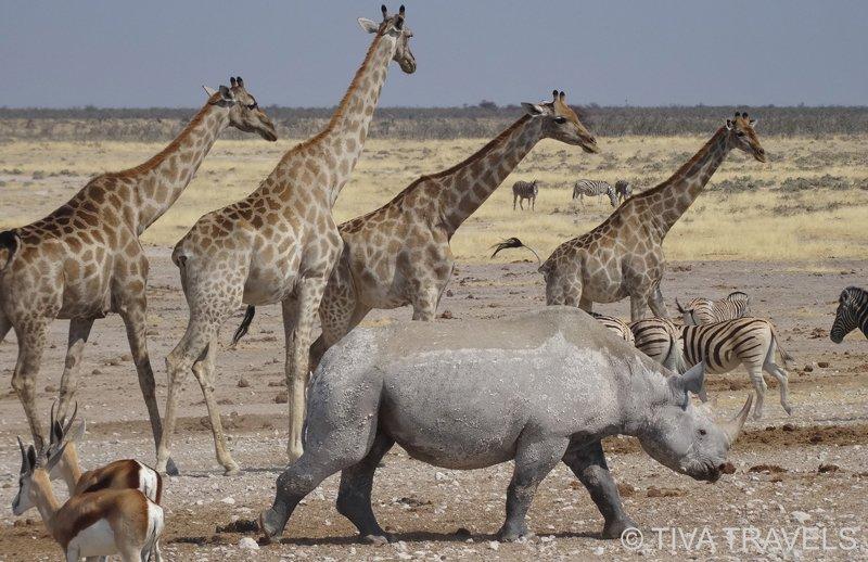 TIVA Travels - Belgische Touroperator gespecialiseerd in Namibië