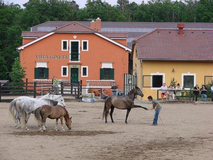 Villa Gineta - Logeren bij Belgen in Tsjechië